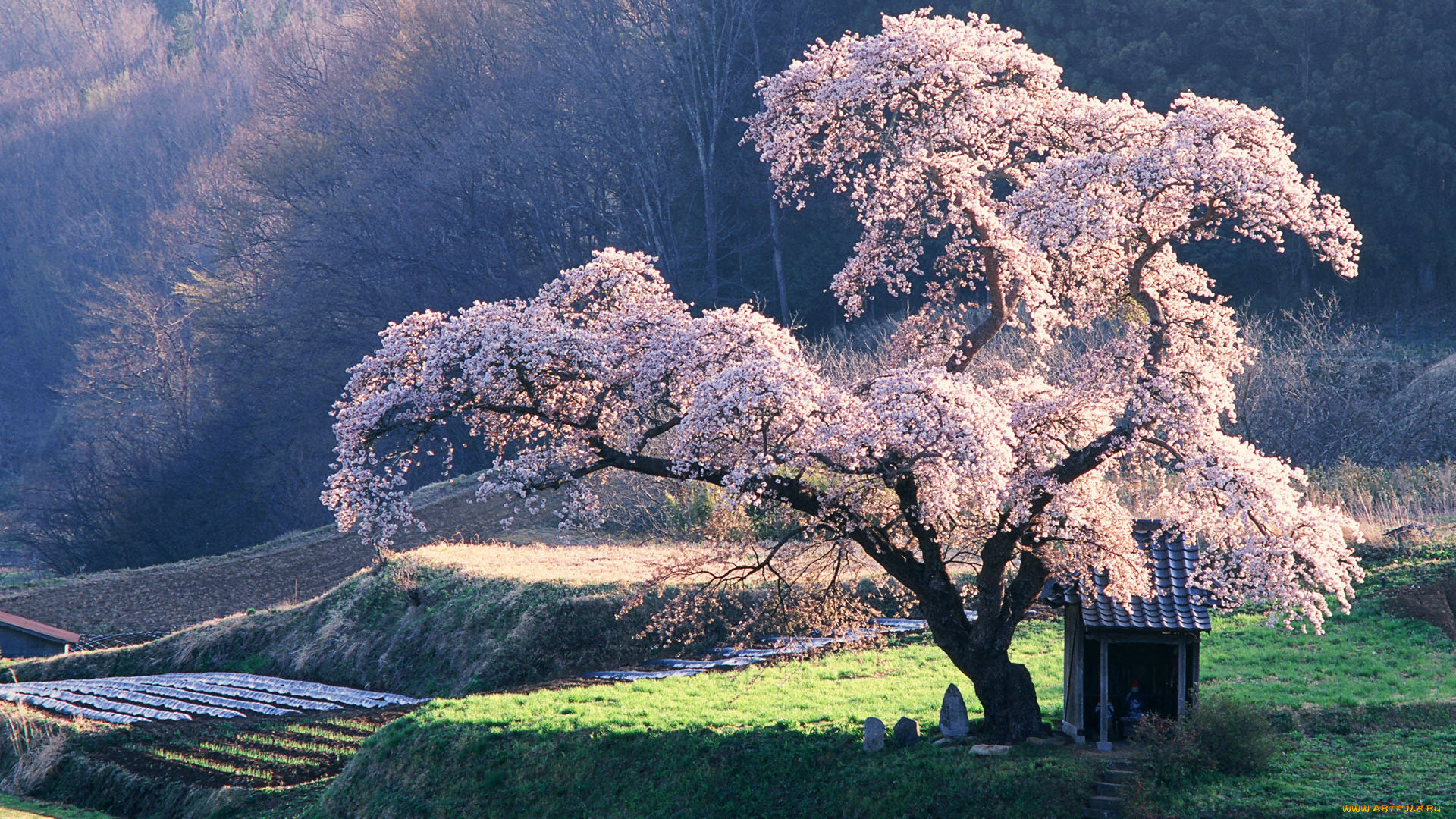 a description of the beautiful things traditions and cultures you can see in japan